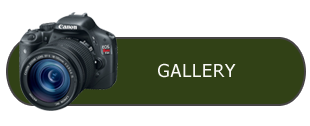 Triple M gallery